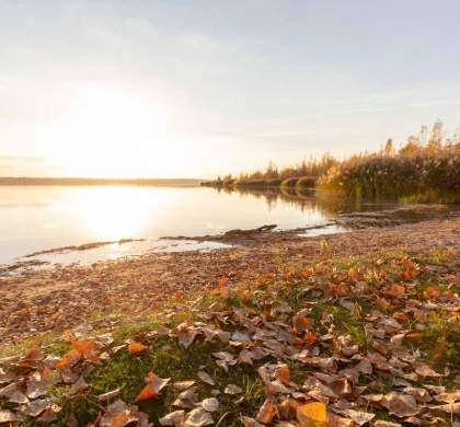 Herbst am Geiseltalsee
