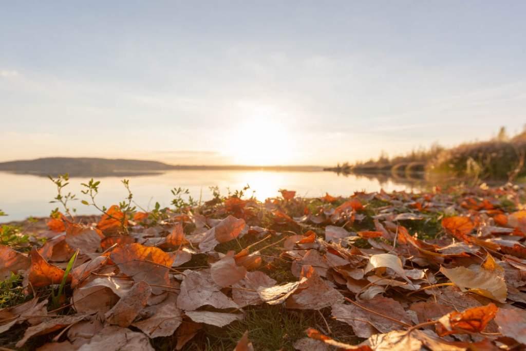 Herbstlaub am See