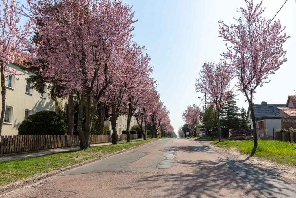 Branderodaer Straße in Mücheln
