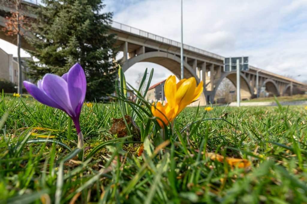 Frühling am Viadukt in Mücheln Geiseltal