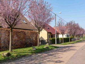 Bild 0042 | Frühling in Mücheln